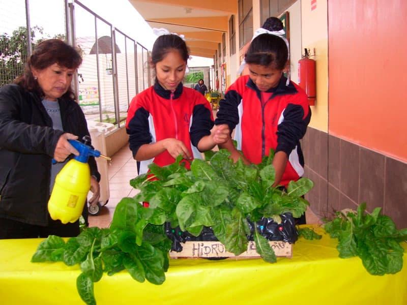 Feria de hortalizas