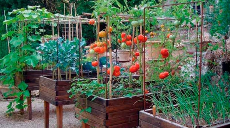 Estructura para tomates
