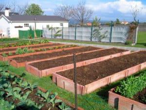 Lee más sobre el artículo Preparación de camas de tierra de cultivo