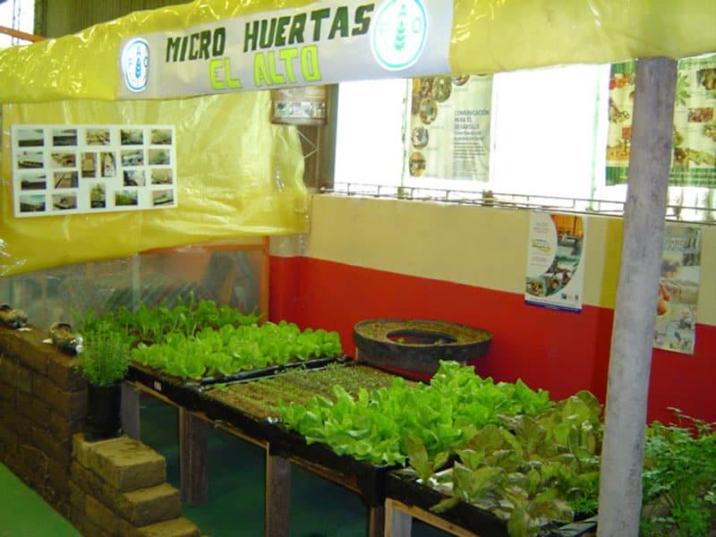 Cultivos con Hidroponía