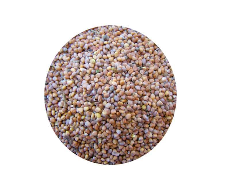 Semillas de Rábanos