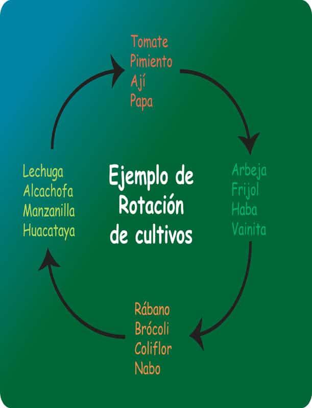 Lee más sobre el artículo Rotación de cultivos