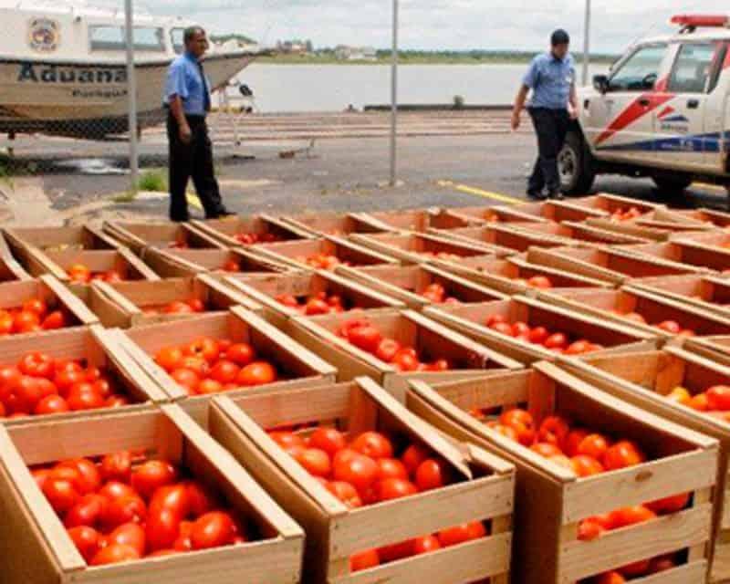Tomates en cajas clasificados