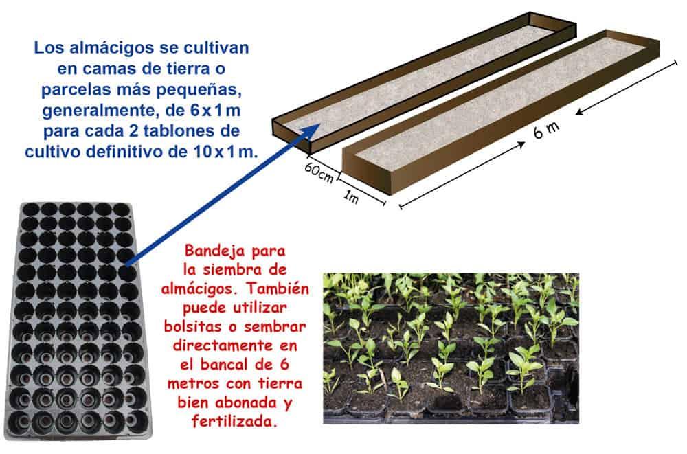 Bandejas para sembrar plantines