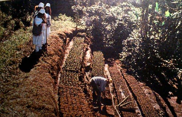 Lee más sobre el artículo Cultivos en Lugares con Pendiente