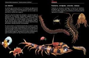 plagas: insectos, miriápodos, arácnidos